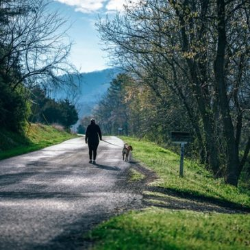 Engaging your dog's brain with 5-minute activities