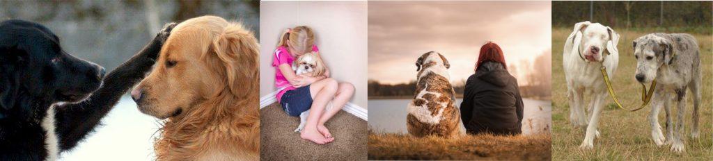 empathic dogs