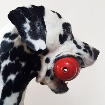Four of my favorite food dispensing toys for dogs