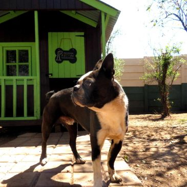 8 Things to consider before deciding on a pet lodge for your dogs