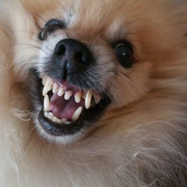 Growl! My dog growls at me