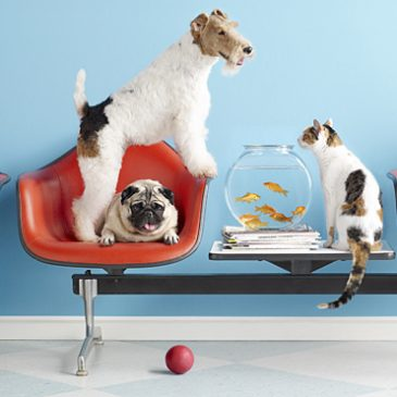 Avoid panic at the vet's reception